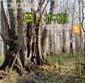 アイヌ文化・草と木樹