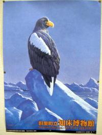 知床博物館オリジナル「オオワシ」ポスター