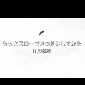 コメツキムシの動画